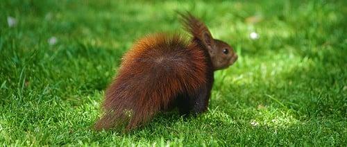 ecureuil-caisse epargne