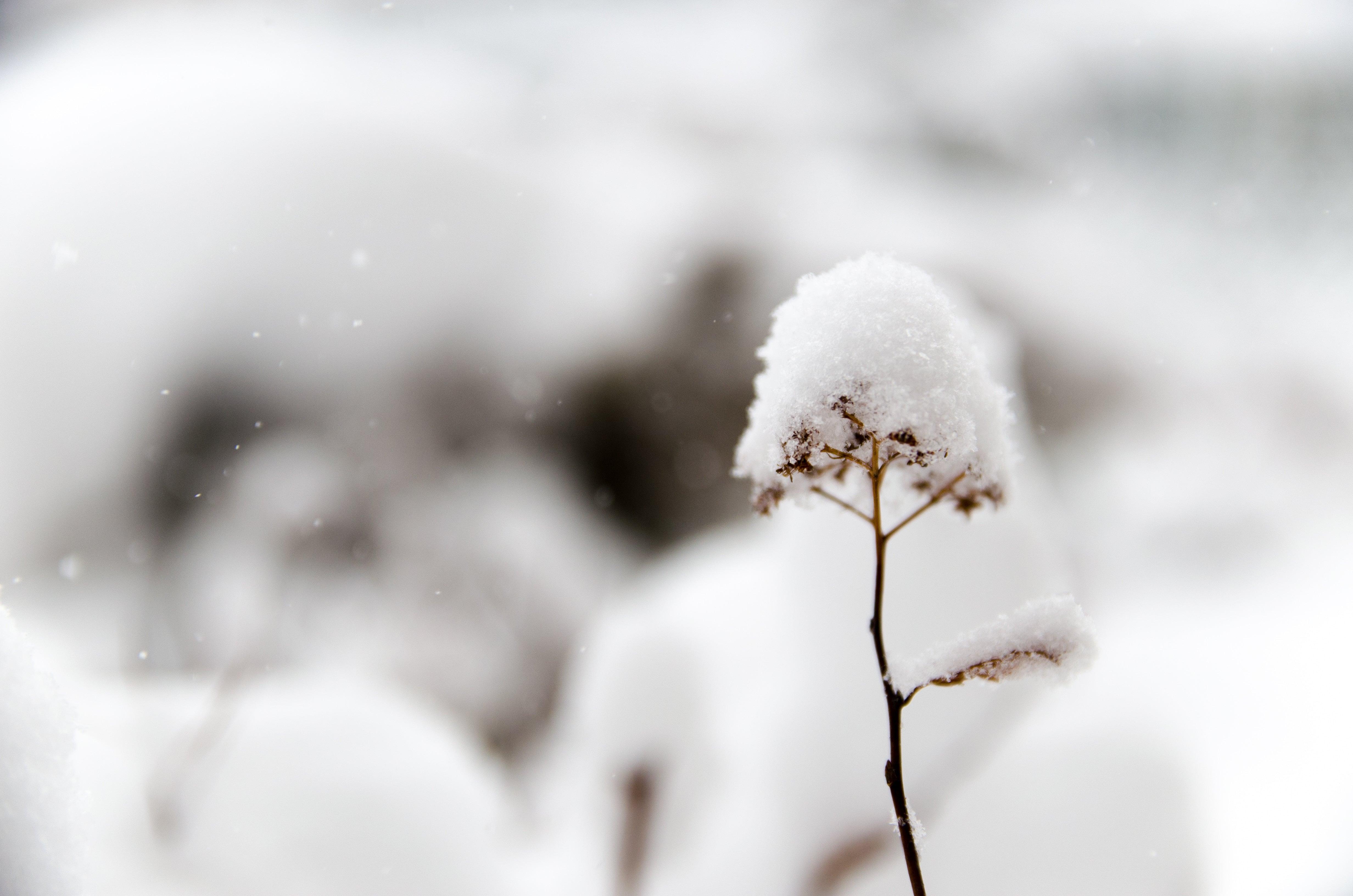 télétravail neige