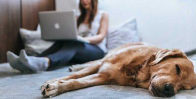Teletravail à la maison avce un chien